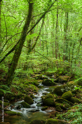 Canvas Print green forest in spain