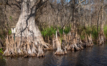Everglades Landscapes. Orlando Wetlands Landscapes Exposure While Doing A Airboat Tour