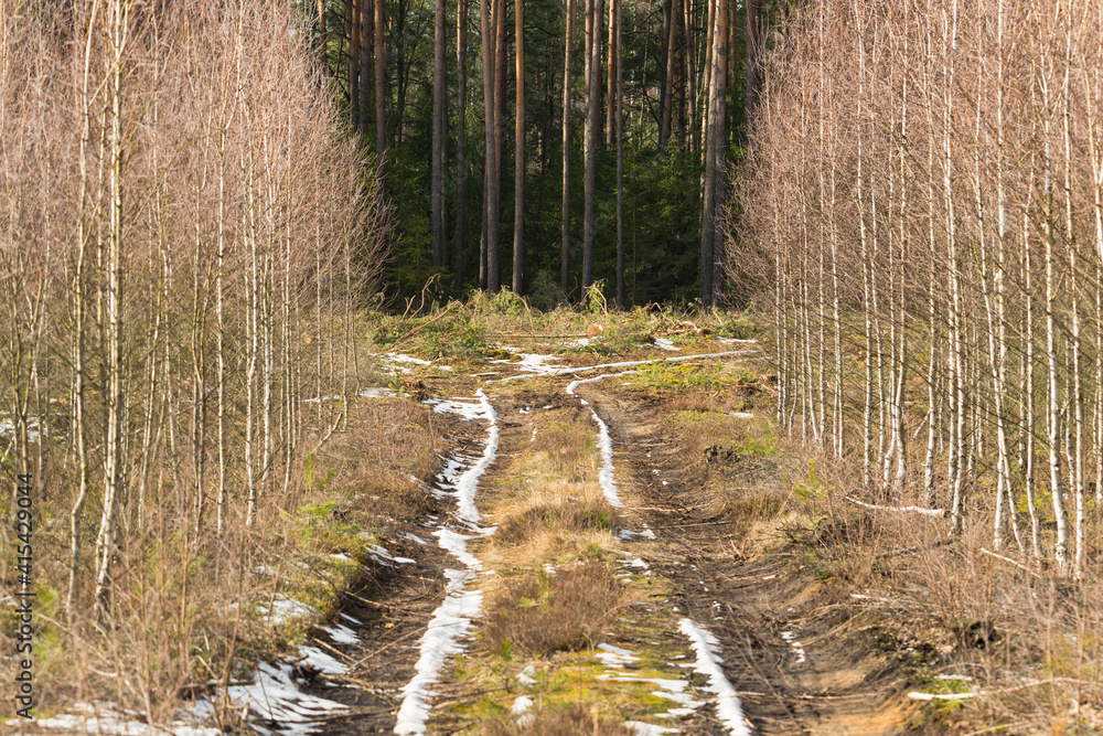 Fototapeta Wiosenne roztopy w lesie.