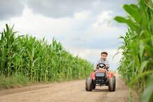 A Farmer Boy Is Driving A Tractor Through A Corn Field.
