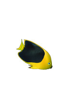 Yellow Tang Fish Isolated On White