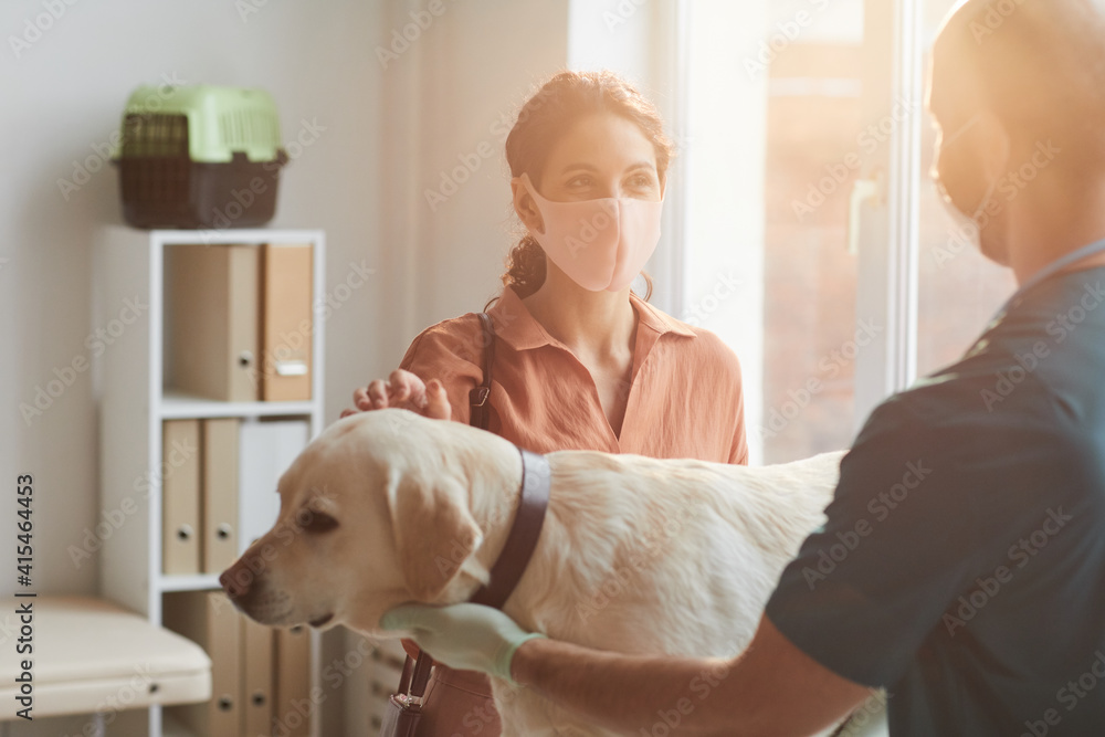 Fototapeta Waist up portrait of young woman wearing mask while talking to veterinarian examining dog at vet clinic, scene lit by sunlight, copy space