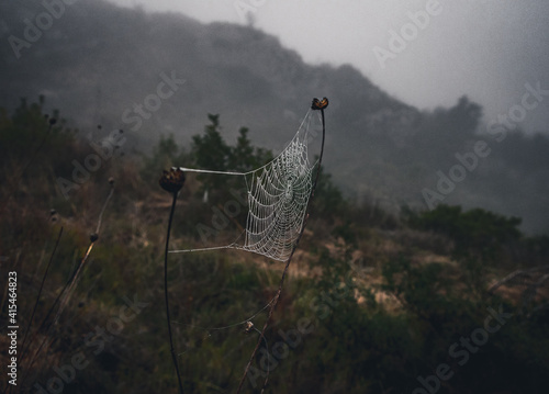 Photo Spider web woven between some dry branches, slightly dampened by dew and fog, in a Mediterranean forest, on a winter day and with a mysterious atmosphere