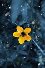 Yellow Flower In Water