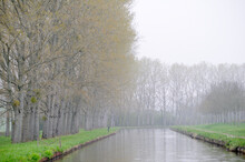 Spring Trees And Lush Undergrowth Along The Banks Of The Nivernais Canal, Burgundy, France