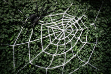 Spooky Spider And Spiderweb As A Halloween Decoration On Green Hedge