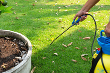 Gardener Spray Herbicide To Kill Weed In The Lawn In Garden