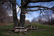 Wooden Picnic Table Under The Tree