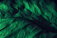 Close Up Beautiful Abstraction  Leaf Texture In Green Neon Light. Minimalism Retro Style Concept. Background Pattern For Design. Macro Photography View.