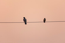 Birds Sitting On A High Voltage Electric Cable Wire