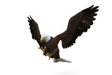Bald Eagle Diving To Catch Prey. 3d Illustration Isolated On White Background.
