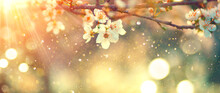 Spring Blossom Background. Beautiful Nature Scene With Blooming Tree And Sun Flare. Sunny Day. Spring Flowers. Beautiful Orchard. Abstract Blurred Background. Cherry Or Sakura Blossoms. Springtime