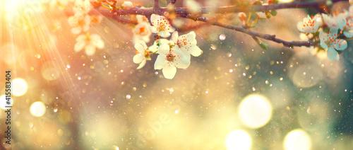 Obraz na plátně Spring blossom background