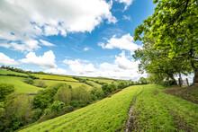 Rolling Devon Hills In The Summer