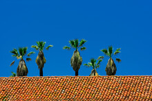 Palm Trees Behind A Red Tile Roof In Santa Barbara, California, USA