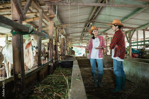 Two cow breeders wearing casual clothes stand chatting while at the cattle farm Fototapeta