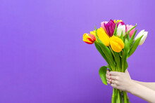 A Bouquet Of Tulips In The Hands Of A Purple Background, The Boy Gives A Bouquet Of Tulips. Congratulations On The Holiday, March 8, Valentine's Day Or Birthday. Multicolored Tulips In Hand