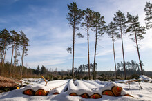 Logs Of Wood Covered With A Thick Layer Of Snow. Deforestation In Central Europe.