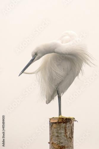 Photo Garza peinando sus plumas, sobre un poste de madera en una mañana con bruma y hu