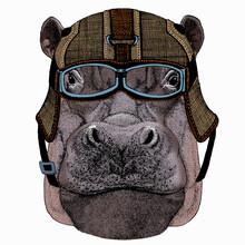 Hippo, Hippopotamus Portrait. Head Of Wild Animal.
