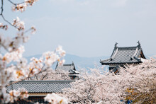 Koriyama Castle Park With Cherry Blossoms In Nara, Japan