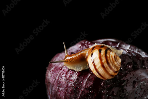 Photo Snail and purple cabbage on dark background
