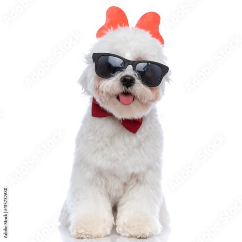 cool bichon dog wearing butterfly headband, sunglasses Fototapet