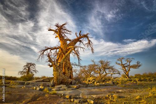 Wallpaper Mural Landscape with Baobab trees (Adansonia digitata) in the Makgadikgadi salt pan, B