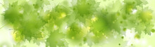 Abstract Green Leaves Shiny Summer Background. Vector Banner Design