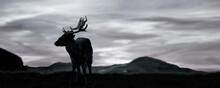 Silhouette Of A Deer Summer Season Sunset.