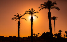 Beautiful Sunset At The Beach In The Tropics. Silhouette Of Tropical Palm Tree In Egypt.
