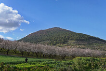 Natural View Of Mount Tabor In Galilee, Israel Under A Clear Sky Background