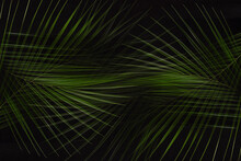 Tropical Dark Summer Abstract Nature Background - Green Palm Leaves As Bizarre Pattern On Black Color.