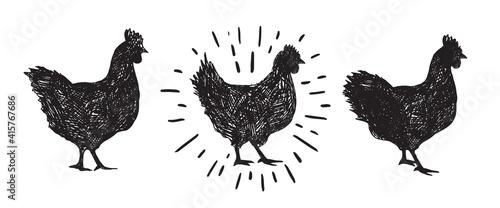 Fotomural Chicken hand drawn illustration, Vector illustration.