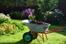 Wheelbarrow Full Of Compost On Green Lawn With Well-groomed Phlox Flowers In Private Farmhouse. Seasonal Work And Fertilization In Garden. Outdoors.