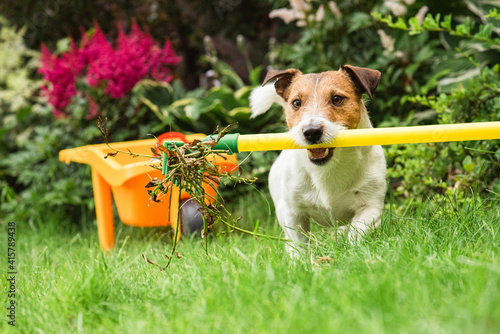 Garden spring clean up concept with dog cleaning from old plants backyard lawn with rake © alexei_tm