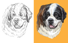 Vector Illustration Portrait Of Cute Dog St Bernard