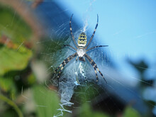 A Large Spider With Yellow Stripes Sits In The Center Of The Web.