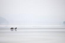 Ducks On A Foggy Icy Lake