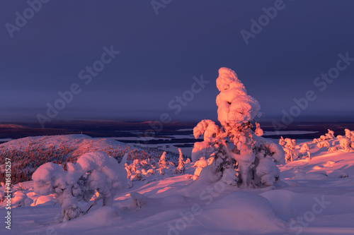 Fotografie, Obraz Trees in the snow on the mountainside in a red sunset