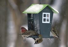 Birds On Bird House Feeder In Winter