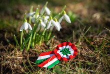 Close Up Tricolor Rosette Symbol Of The Hungarian National Day 15th Of March With Snowdrop Fair Maid Flower
