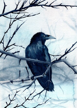 Watercolor Illustration Of A Raven Sitting On A Tree Branch Under Falling Snow On A White Snowy Background