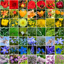 Collage With Many Images Of Different Colorful Flowers In Rainbow Colors. Full Size.