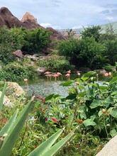 Pink Flamingos In The Habitat. Birds Among The Pond Among The Greenery And Water.