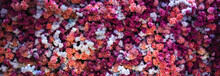 Wall Of Red And White Flowers Nature Background