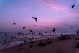 Stado ptaków na tle plaży i zachodu słońca nad oceanem.