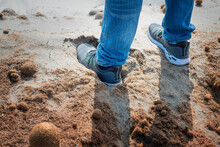 Two Man Feet Wearing Shoes And Jeans While It Sinks On The Sand Full Of Algae. Walking On The Unstable Sand Beach. Exercise To Strengthen The Ankle And Calf. Thousands Of Brown Algae Mixed With Sand.