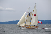 The Schooner Maple Leaf Was Built In 1904 At Vancouver Shipyard, British Columbia.