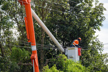 An Arborist Prunes Trees Close To Power Lines In Canterbury, New Zealand